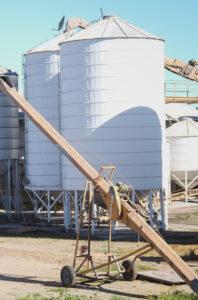 Bucking the trend: Buckwheat Enterprises